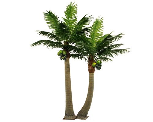 椰子樹組合